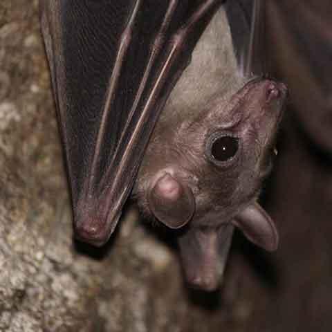 bat removal service in Minneapolis
